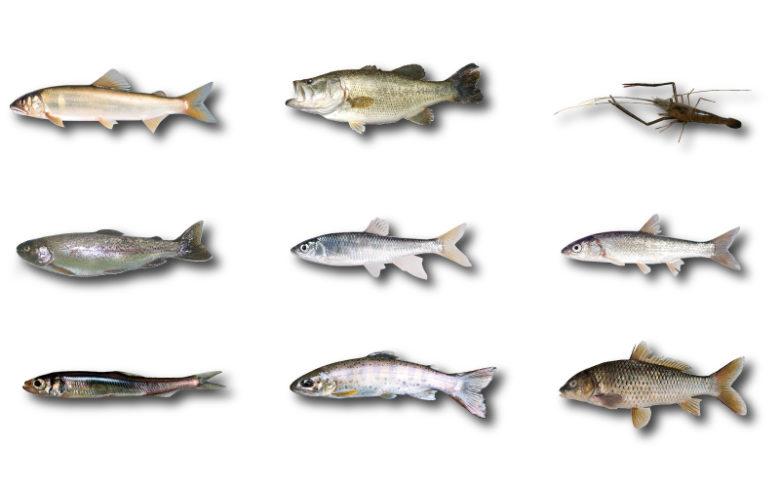 淡水の魚アイコン